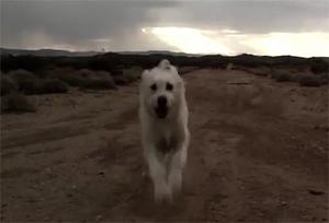 Глупая неуклюжая собачка