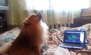 Собака подпевает песне из рекламы