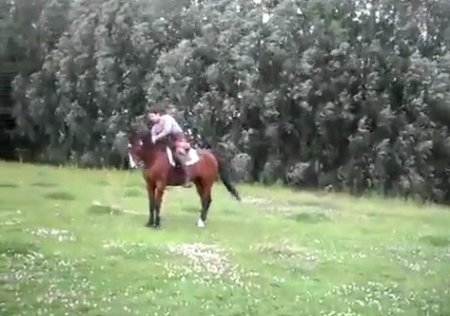 Лошадь прыгает со скакалкой