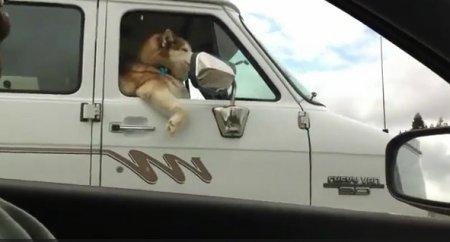 Собака на расслабоне