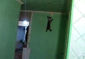 Спайдер-кот