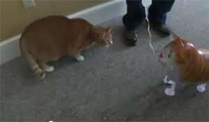 Кот против шарика