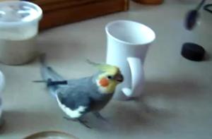 Любитель приготовления кофе