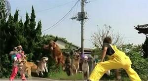 Собачий рекорд Гиннеса 2012