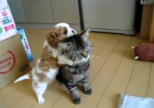 Приставучий щенок