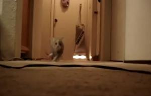 Котята напугали сами себя