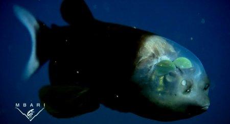 Необычные рыбы в водах Калифорнии