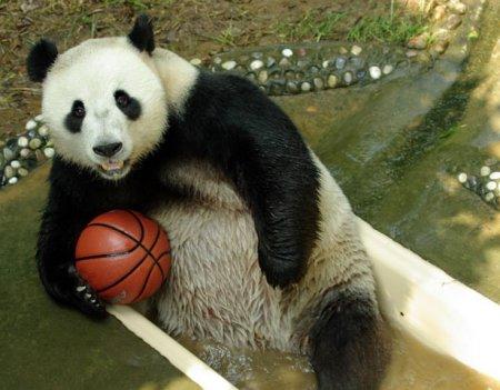 Заповедник fuzhou panda world южная часть