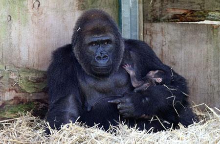 Радостное событие в Бристольском зоопарке