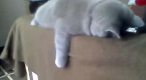 Котенок в отключке
