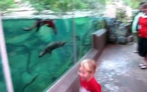 Игривый морской котик