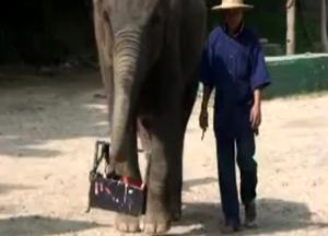 Слон рисует автопортрет