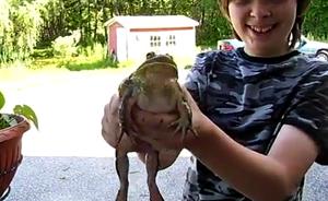 Поющая лягушка