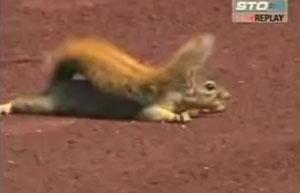 Белка прячется во время чемпионата по бейсболу