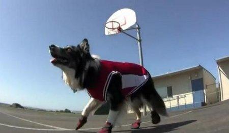 Пес-баскетболист