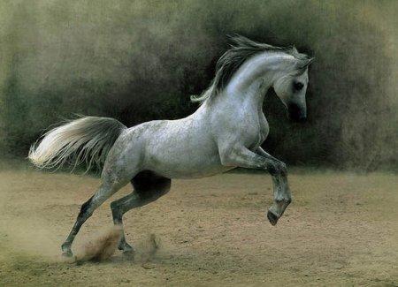 Фотографии лошадей Войтека Квятковски
