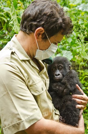 Спасение детеныша гориллы