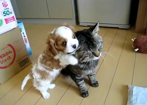 Любвиобильный щенок