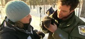 Репортаж о новорожденных медвежатах