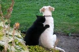 Собака на сеансе массажа у кота