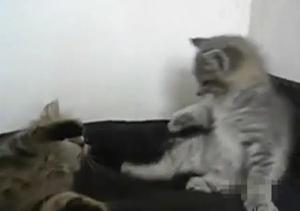 Котенок-каратист