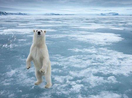 Зачем медведь поднимается на задние лапы