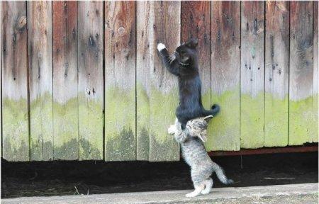 Прикольные котята