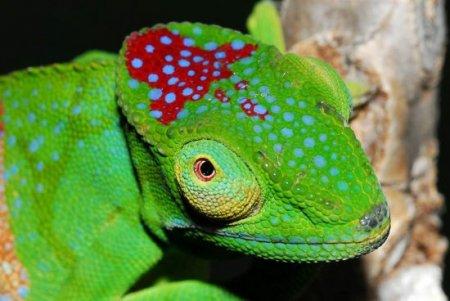 Экзотические животные Мадагаскара