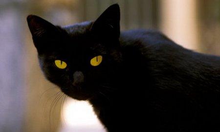 Самый богатый кот Томмазо из Рима