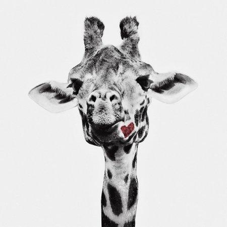 Курьезные снимки животных