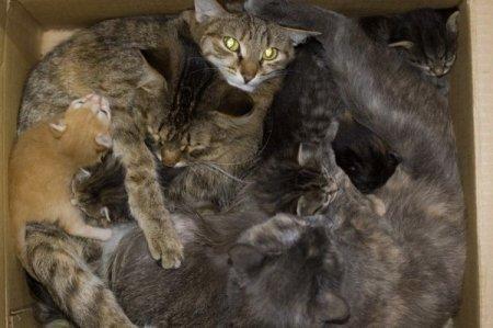 Сколько кошек в коробке?