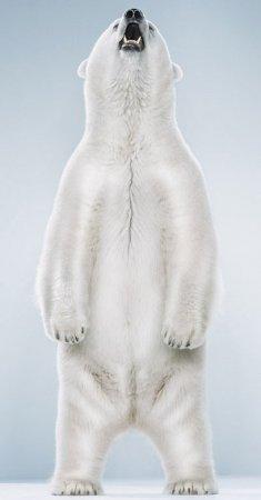 Великолепные фотографии мишек
