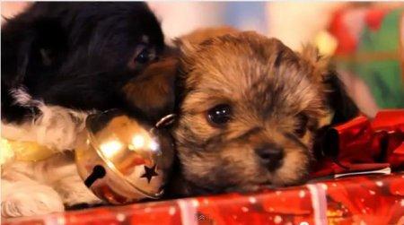 Рождественские щенята