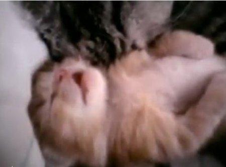 Котенку снятся кошмары