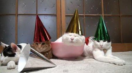 Самый ленивый рождественский кот