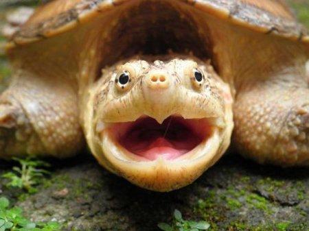животных  очень смешные картинки про