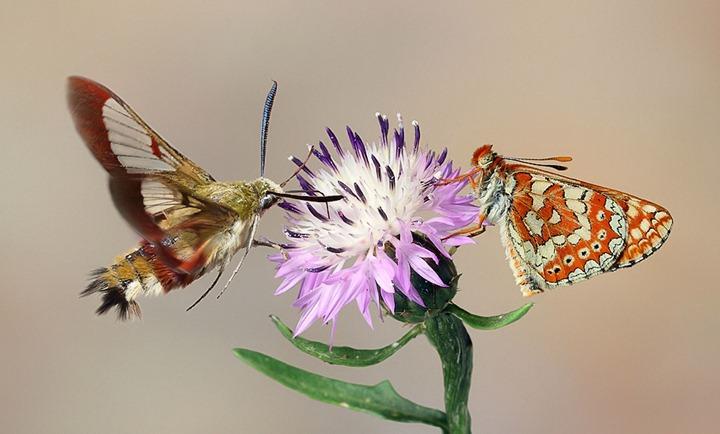 Цветы и насекомые макросъемки