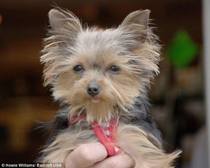 Маленькая служебная собака в мире
