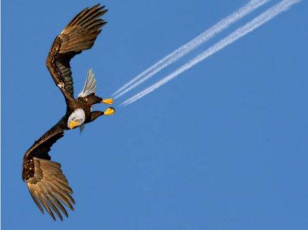 Самые странные и необычные фотографии животных 2011