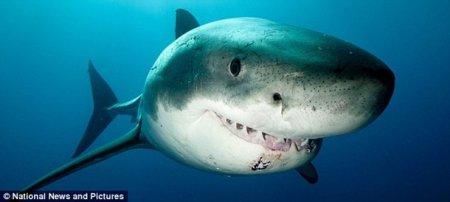 Белые акулы на расстоянии вытянутой руки