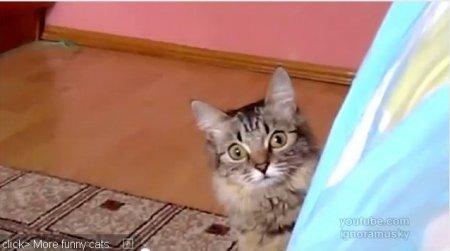 Кот задумал что-то недоброе