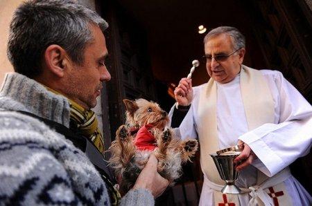 Благословение животных в день Св. Антония