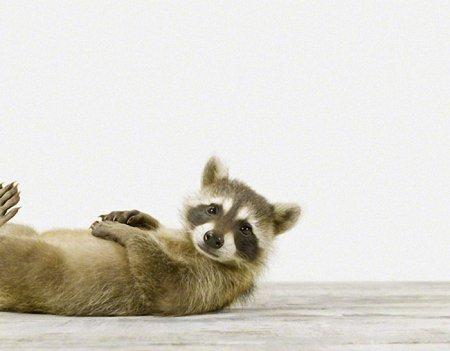 Малыши животных в фотографиях Шерон Монтроуз