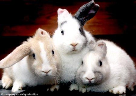 В приют для животных подкинули одноухих кроликов