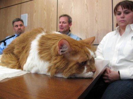 20 тысяч долларов на операцию кота