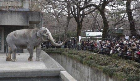 Токийский зоопарк отпраздновал 65-летие слонихи Ханако