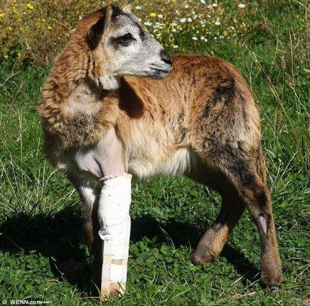 Козе Кармен сделали уникальный протез ноги