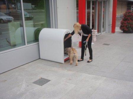Dogbox для правильной парковки собаки