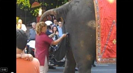 Слон испортил свадебную церемонию