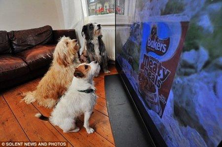Необычная реклама для собак